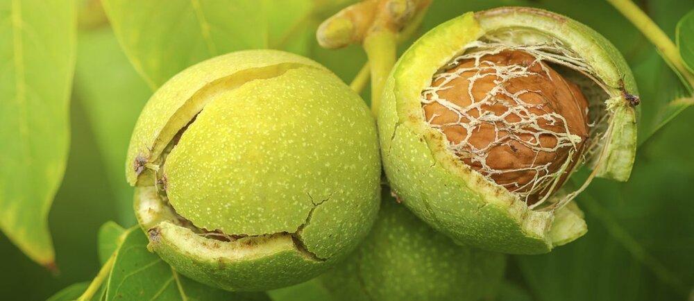 Fructe Nuc